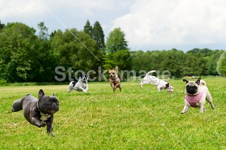 Foof, il parco e museo dedicato ai cani